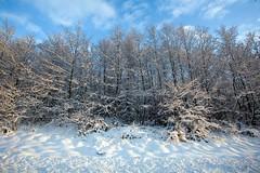 Irish Winter (C) Dec 2011