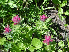 Paintbrush still not peaking on Crystal Lakes trail.