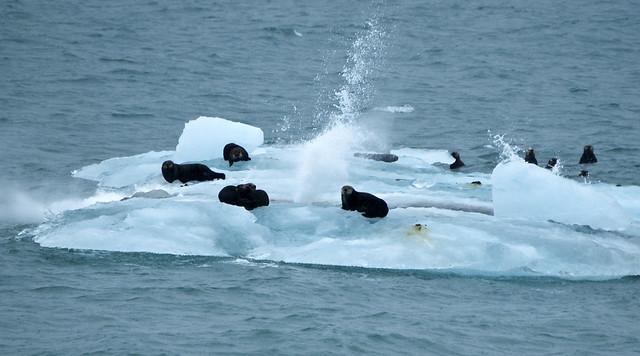 Otter Iceberg