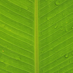 Green leaf (e.nhan) Tags: life light green art nature leaves closeup leaf dof bokeh textures backlighting enhan