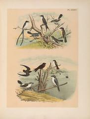 Anglų lietuvių žodynas. Žodis grey kingbird reiškia pilka kingbird lietuviškai.