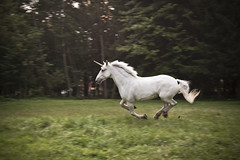 Unicorn - Full Speed (Rob Boudon) Tags: horse animal newjersey daniel pasture unicorn musicvideo gallop yipdeceiver kccarriage getstrict