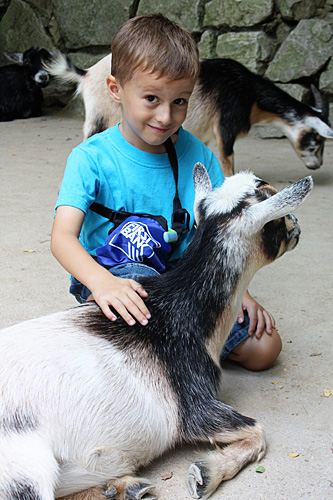 Nathan-petting-goat