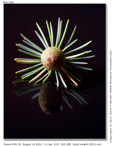 Pine Cone Macro