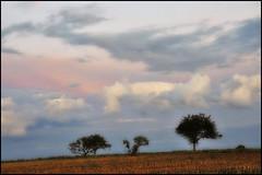 Un soir de septembre (Excalibur67) Tags: trees sky cloud nature landscape nikon lumire couleurs ciel arbres alsace nuages paysage d90 vosgesdunord