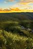 Wild Flowers (edwinemmerick) Tags: flowers sunset sky cloud mountains 20d weather canon landscape eos rocks wind australia bluemountains nsw wildflowers edwin leura gumtrees emmerick edwinemmerick