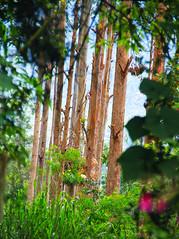 (7LM) Tags: nature srilanka