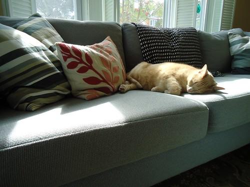 Max naps