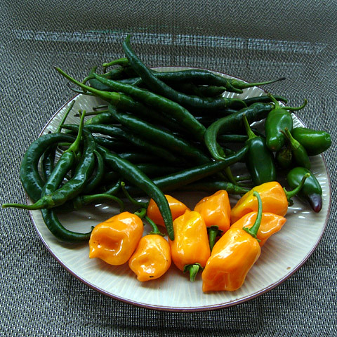 060924_peppers