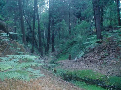 Charneca do Nicho - Ribeira do Vale de Sobreiras