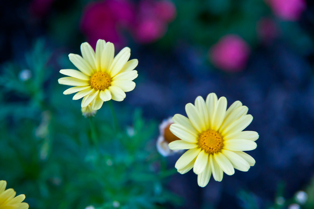 Flower away