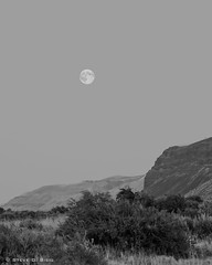 Moon Over Saddle Mountains (Steve G. Bisig) Tags: blue summer sky usa moon mountains night evening skies unitedstates fineart scenic northamerica range grantcounty saddlemountains