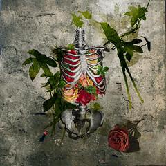 Love .. (Ashour talk) Tags: life flowers roses flower love rose skeleton heart human