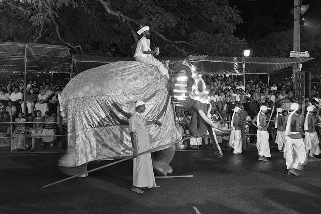 Perahera_Elephant_Rider_Sml-3594