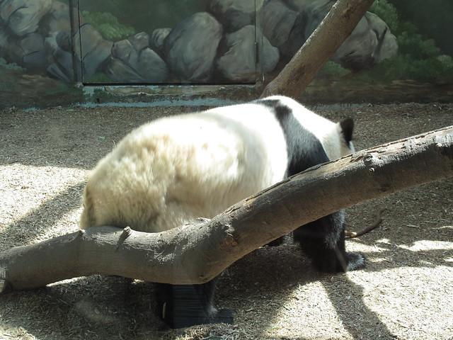 Zoo 0063