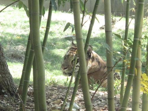 Zoo 0020