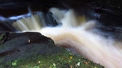 The River Gelt (ambo333) Tags: wood uk england water river woods h2o cumbria brampton gelt hayton geltwood geltsdale geltwoods rivergelt middlegelt