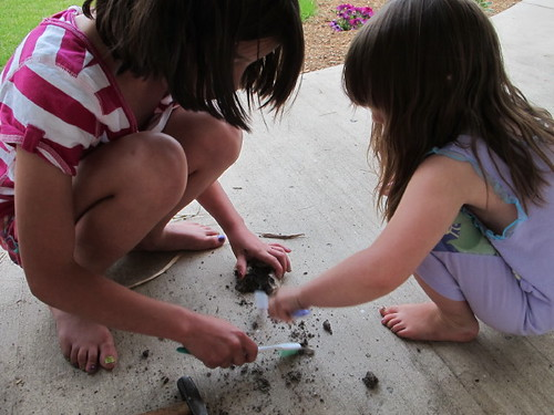 Excavating our fossilized dinosaur eggs #10
