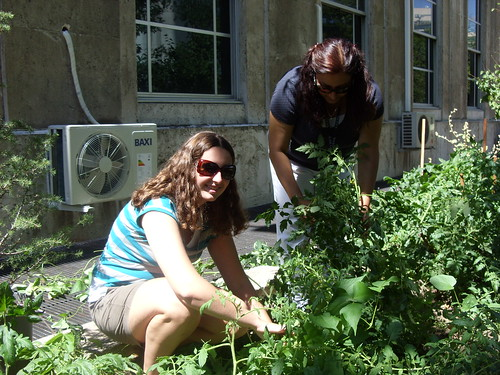 Clara Hamilton (left) and Nilgun Birinci (right), look for tomatoes in the People's Garden in Ankara, Turkey.