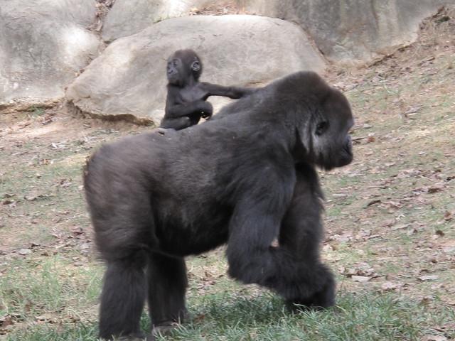 Zoo 0288
