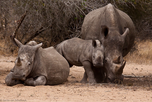 World Rhino Day - 22 September 2011 by gerdavs