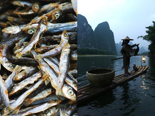 cormorant fishing - china