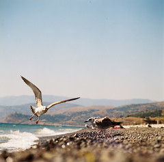 gulls (Vitaly Khoruzhko) Tags: travel gulls bronica crimea blacksea