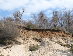 Eroding Coastal Bluff with Loess (sandy richard) Tags: geology wildwood wildwoodstatepark newyorkstateparks longislandbeaches sandyrichard longislandgeology sandrarichard wildwoodstateparkgeology
