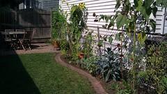 After, garden