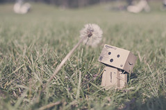 Danbo discovering the outside world =) (HM STUDIOS) Tags: flowers flower 35mm toy toys flora bokeh danbo d90