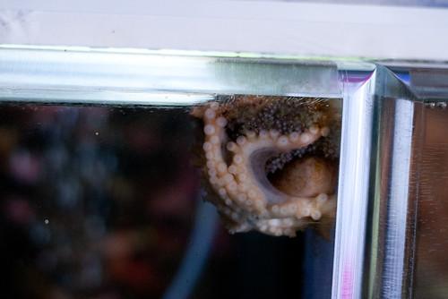 octopus1 (1 of 1)