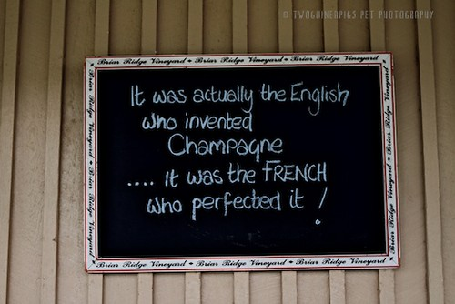 Champagne, chalkboard by twoguineapigs pet photography