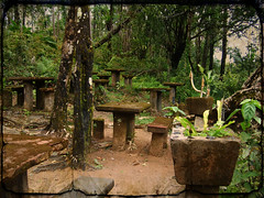 Cafe by the Pool (Dnalaez) Tags: old history texture rainforest scenery australia queensland touristattraction paronellapark