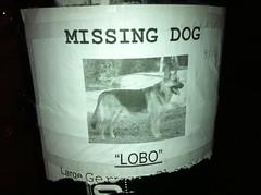 """Lobo"""
