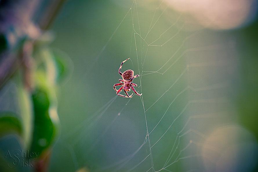 Itsy Bitsy Spider RS