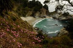 McWay Falls behind a field of flowers (JasonianPhotography) Tags: ocean california flowers bigsur highway1 pacificocean waterfalls oceanviews juliapfeifferburnsstatepark mcwayfalls gridcritique