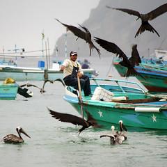 Puerto López, Ecuador (Jessie Reeder) Tags: deleteme5 deleteme8 deleteme deleteme2 deleteme3 deleteme4 deleteme6 deleteme9 deleteme7 beach southamerica birds ecuador saveme fishermen deleteme10 playa pescadores sudamérica puertolópez