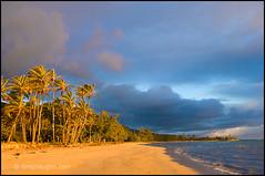 Punaluu Beach, Oahu (Greg Vaughn) Tags: statepark travel beach nature horizontal landscape outdoors island hawaii islands coast pacific earlymorning scenic parks nobody shore hawaiian beaches tropical coastline tropics warmlight costal punaluu tradewinds cocopalms windwardoahu punaluubeach coconutpalmtrees