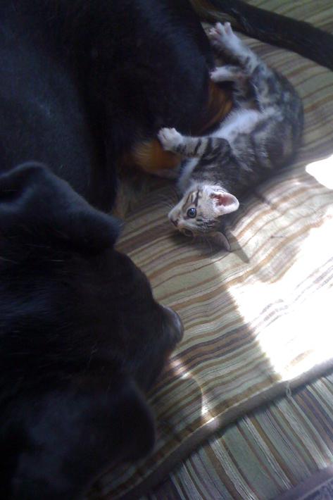 100111_kittens07