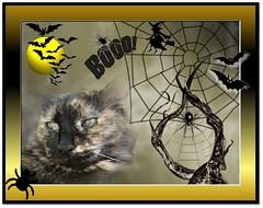 (*Toia*) Tags: halloween catnipaddicts