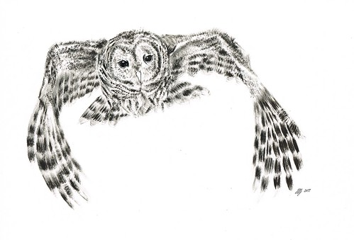 4. Owl by jina11