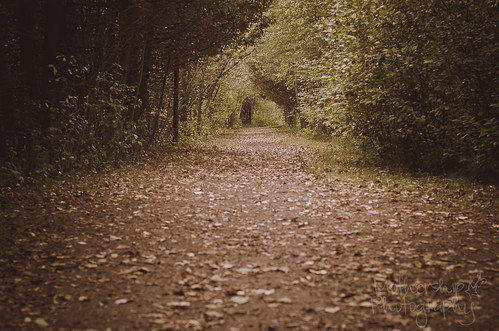 296:365 The quiet path