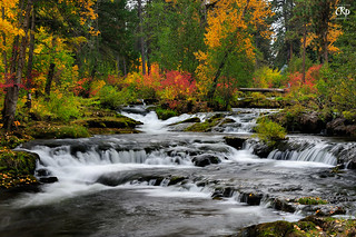 Trout River Fall Colors