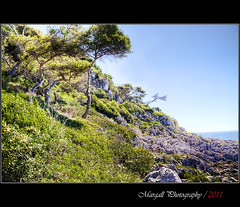 My version of paradise - HDR (Margall photography) Tags: sea summer panorama pine landscape photography paradise martin montecarlo cap marco hdr galletto margall