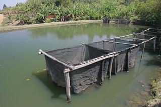 Aquaculture, photo by Stevie Mann, 2007