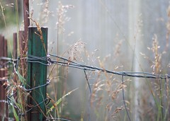 september morn (kimberly-jane) Tags: fence morninglight tallgrass septembermorn kimberlyanderson