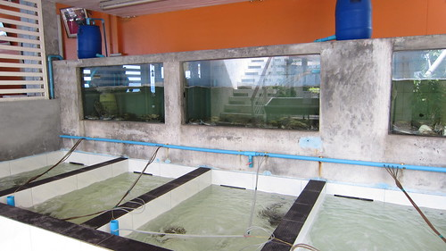 Koh Samui Ta Rua Samui Seafood restaurant サムイ島シーフードレストラン タールア (10)