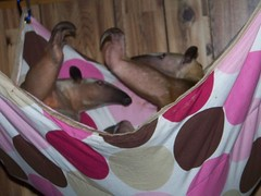 Pua and Aurora play in the hammock