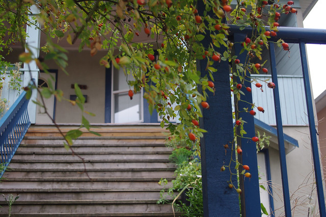 Rosehips & House Steps