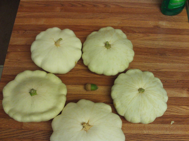 Patty Pan Squash And The Acorn